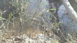 Balkanda käbir gallaçy kärendeçiler fosfor döküniniň üpjünçiliginden şikaýat edýär