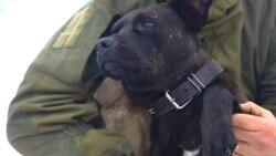 Saving Corporal The Canine, Ukraine's Dog Of War