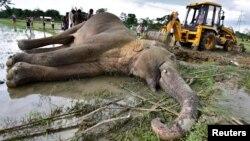Жителите на село Хармати в Индия се опитват да преместят с багер тялото на убит слон на 2 май 2019 г.