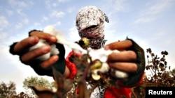 Өзбекстанда мамлекеттик планды аткара албаган дыйкандын үй-мүлкү конфискацияланат