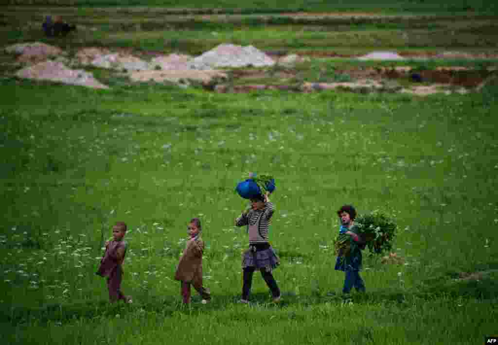 Afghan children carry grass cuttings through a field on the outskirts of Mazar-e Sharif. (AFP/Farshad Usyan)