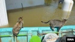 نجات حیوانات گرفتار در سیلاب در آق قلا