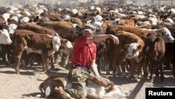 Мужчина, работающий в фермерском хозяйстве. Село Мамай Акмолинской области, 14 июня 2011 года. Иллюстративное фото.