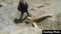 Место обнаружения останков доисторического животного. Иссык-Кульская область.