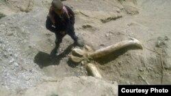 Место обнаружения останков доисторического животного.