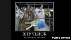 Cat images have proliferated on image boards and social networks in support of the opposition.