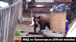 Медведь в деревне. Иллюстративное фото