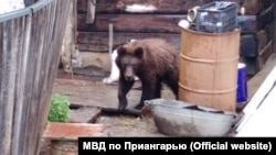 Медведь в деревне Замзор Иркутской области