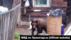 Медведь (архивное фото)