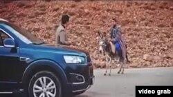 Шавкат Мирзиëевни президентликка тарғиб қилувчи эшак минган одам видеосидан скриншот.