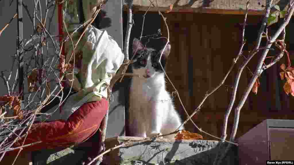 Кошеня гріється в променях поки ще теплого осіннього сонця