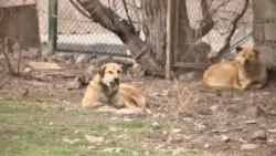 Նույնիսկ այն երեխաները, որ չէին վախենում շներից, հիմա պանիկայի մեջ են. Մալաթիա-Սեբաստիա համայնքի բնակիչ