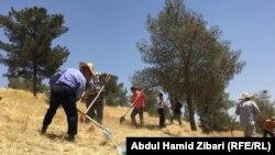حملة لتنظيف الغابات في كردستان