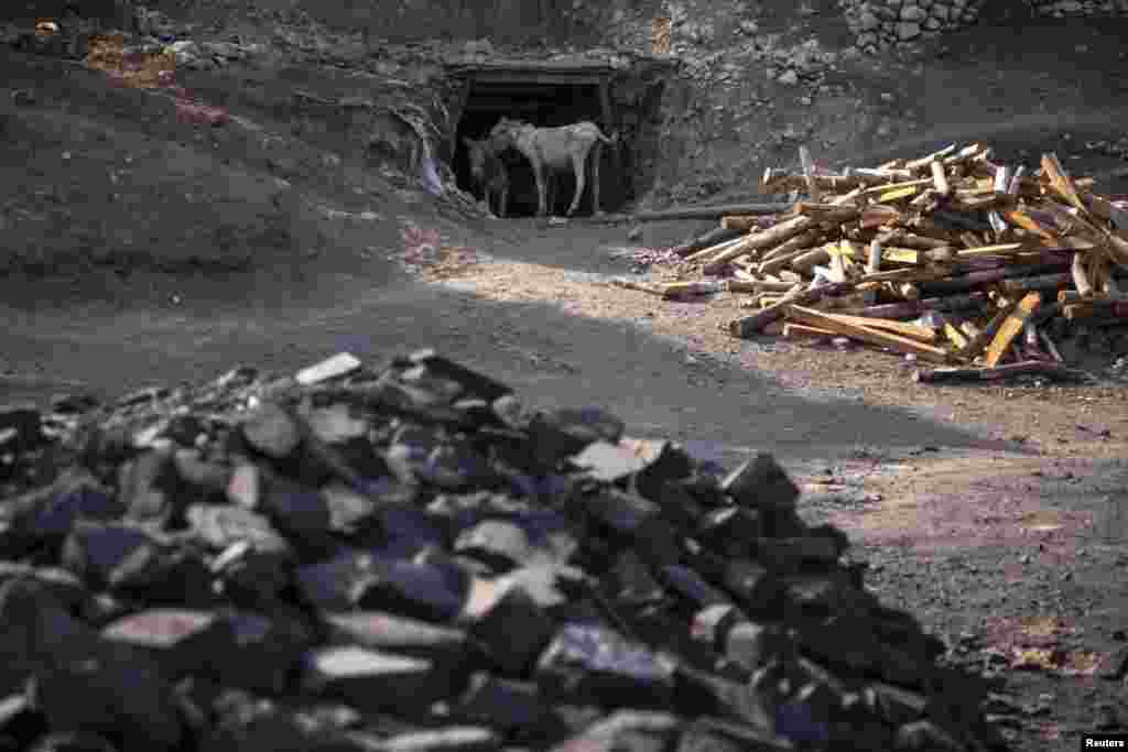Donkeys stand at the entrance of a coal mine.
