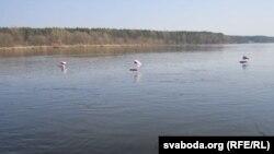 Бел-чырвона-белыя сьцягі плывуць па Нёмане блізу Мастоў