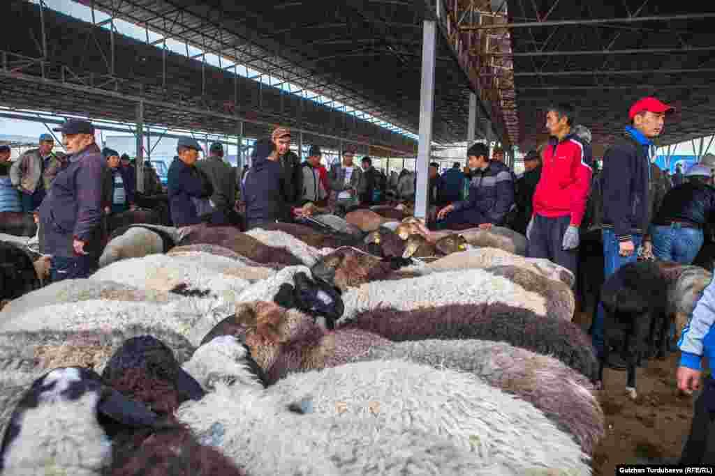 В сезон торжеств спрос на скотину особенно высок.