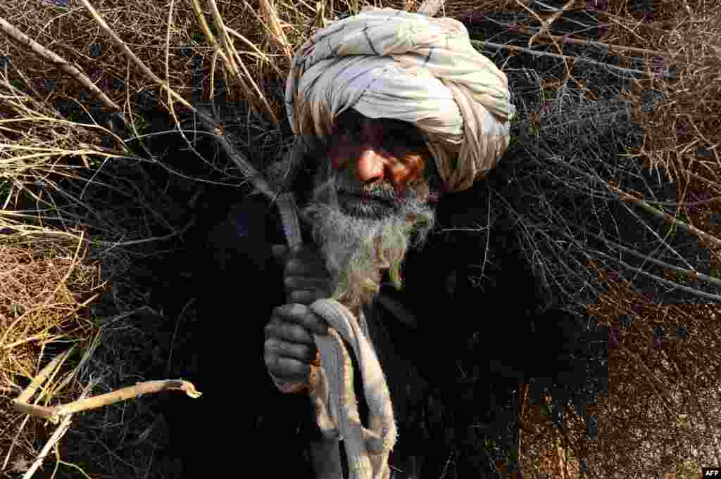 An elderly Afghan man carries firewood over his shoulders in Herat on February 20. (AFP/Aref Karimi)