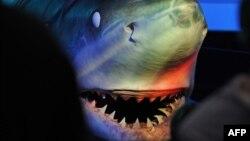 Köpəkbalığı