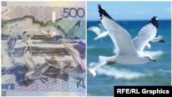Банкнота номиналом 500 тенге и фото, сделанное канадским фотографом-любителем Кейт Тестер.