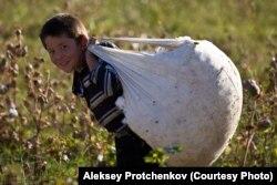 Өзбек бала мақта терімі кезінде жұмыс істеп жүр.Алексей Протченков түсірген сурет.