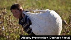 Bolakay paxta terimida (Aleksey Protchenkov surati)