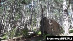 На территории Ялтинского горно-лесного природного заповедника