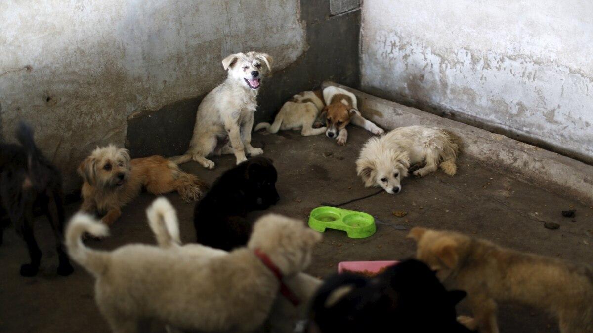 Министерство сельского хозяйства Китая исключило собак из списка животных, чье мясо можно есть