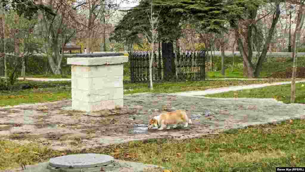 Домашняя собака пьет воду из лужицы – на днях в Севастополе прошли дожди