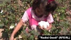 Девочка на уборке хлопка. Таджикистан, 11 октября 2010 года