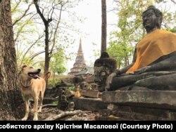 В Індії до безпритульних собак ставляться гірше, ніж в Україні
