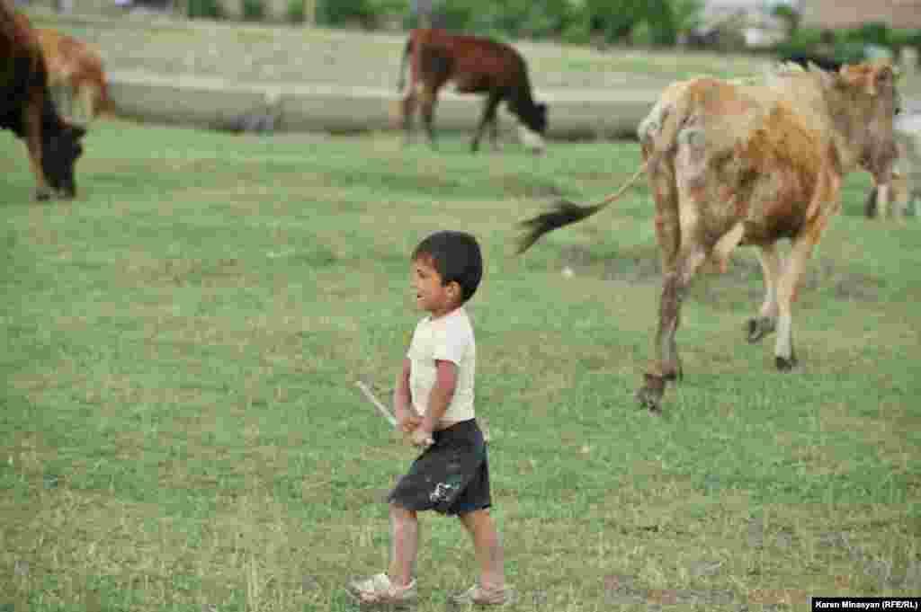 8-летний Гарник уже пасет скот и пытается помогать своей большой семье, состоящей из 8 человек, основным источником дохода которой являются 4 коровы. Село Нор Кюр, Араратская область Армении.