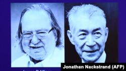 A screen displays portraits of James P Allison (left) and Tasuku Honjo during the announcement of the winners of the 2018 Nobel Prize in physiology or medicine during a press conference at the Karolinska Institute in Stockholm on October 1.