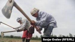 Талаада иштеп жаткан аялдар. Жалал-Абад облусу, 2012-жыл.