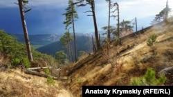 Ущелье Уч-Кош в Крымских горах