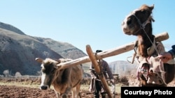 Ўзбекистондаги оддий фермерлар техникага пул топа олмай¸ куни эшак-аравага қолганидан гапиради.