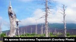 Мертвый лес после извержения вулкана