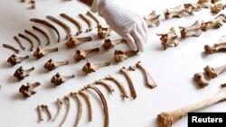 Масове поховання віком понад 500 років знайшли недалеко від столиці Чилі Ліми