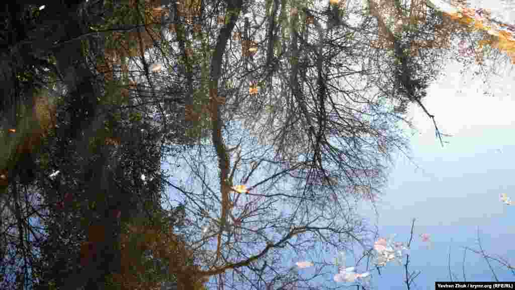 У річковій гладі відображаються небо і дерева