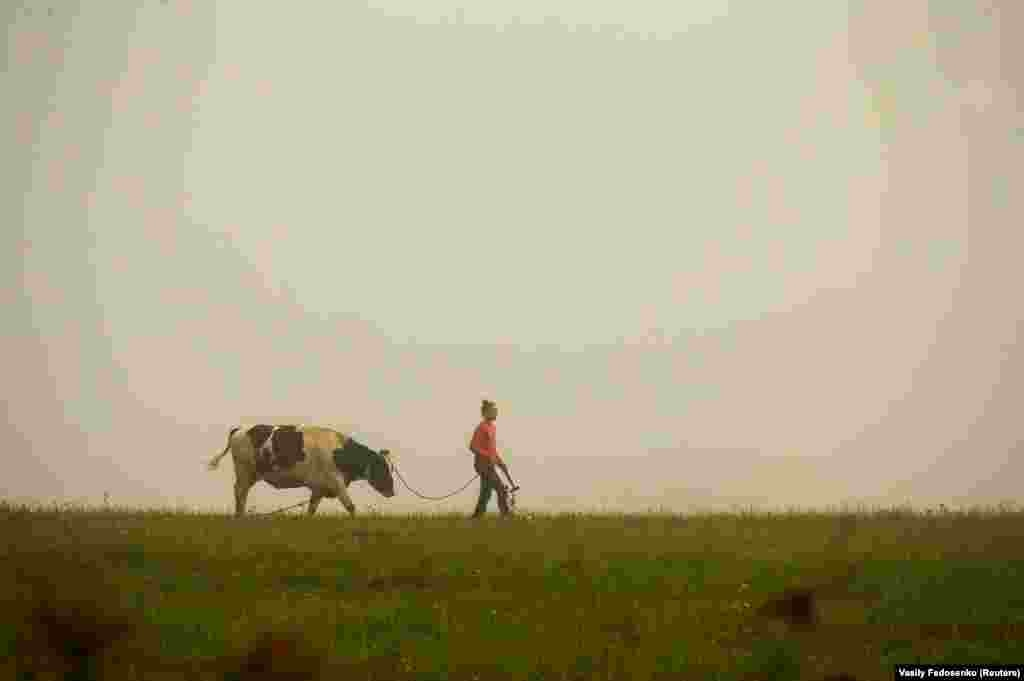 A woman walks with a cow in a field during a foggy morning near the village of Loshany, Belarus. (Reuters/Vasily Fedosenko)