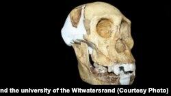 Вид первісної людини Australopithecus sediba