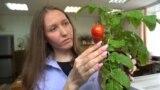 Pomidor_Tomsk
