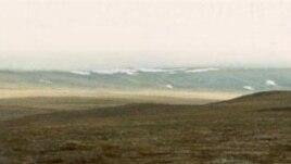 Тундра на острове Врангеля. Здесь три тысячи лет назад жили мамонты.