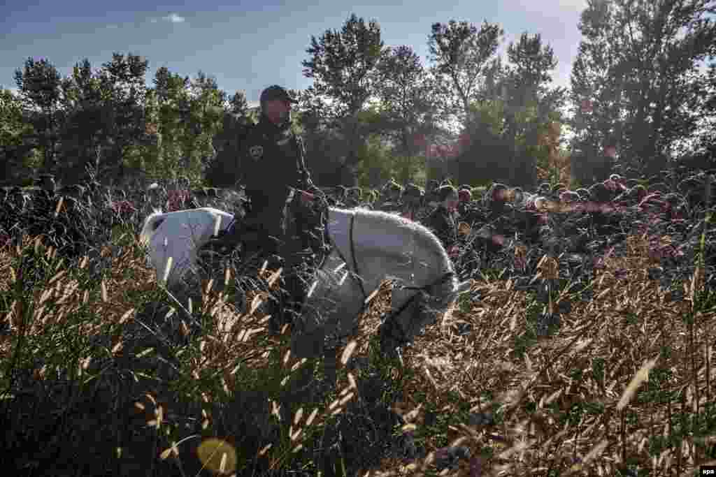 First Prize Stories in the General News Category was won by freelance Russian photographer Sergei Ponomarev. This image from the series shows a Slovenian police officer on horseback escorting migrants after they crossed from Croatia. Under Europe's system of open internal borders, the island's thinly patrolled, easily accessible coastline, within sight of the Turkish coast, might as well be the frontier of France or Germany or Sweden. (October 20, 2015)