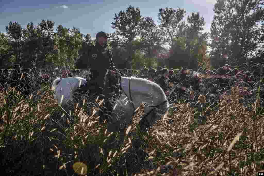 """Фотография Сергея Пономарева, победителя World Press Photo в категории """"Новости"""". Словения, полиция сопровождает беженцев."""