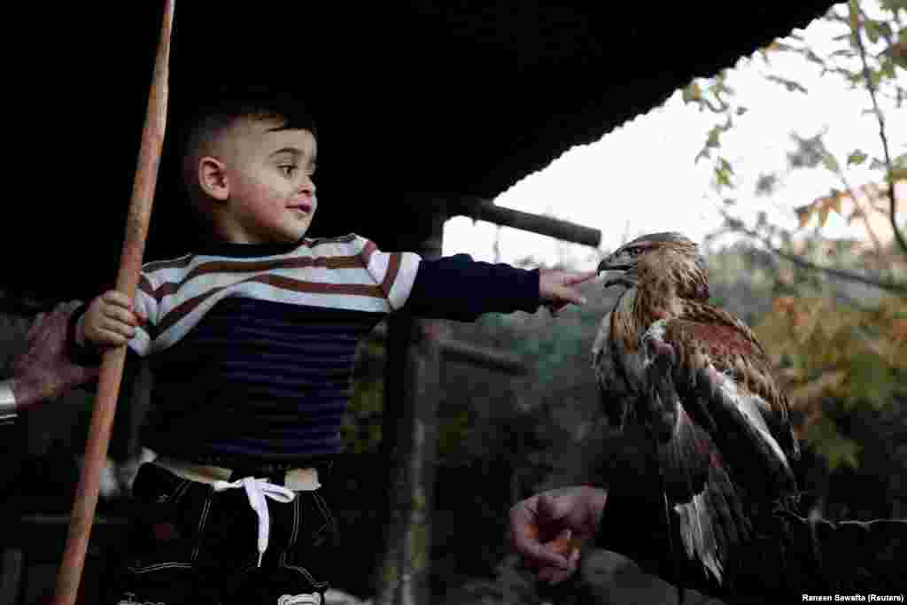 A Palestinian boy plays with a falcon in the West Bank town of Tubas. (Reuters/Raneen Sawafta)