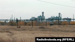На территории заводов в Алчевске пасут коров