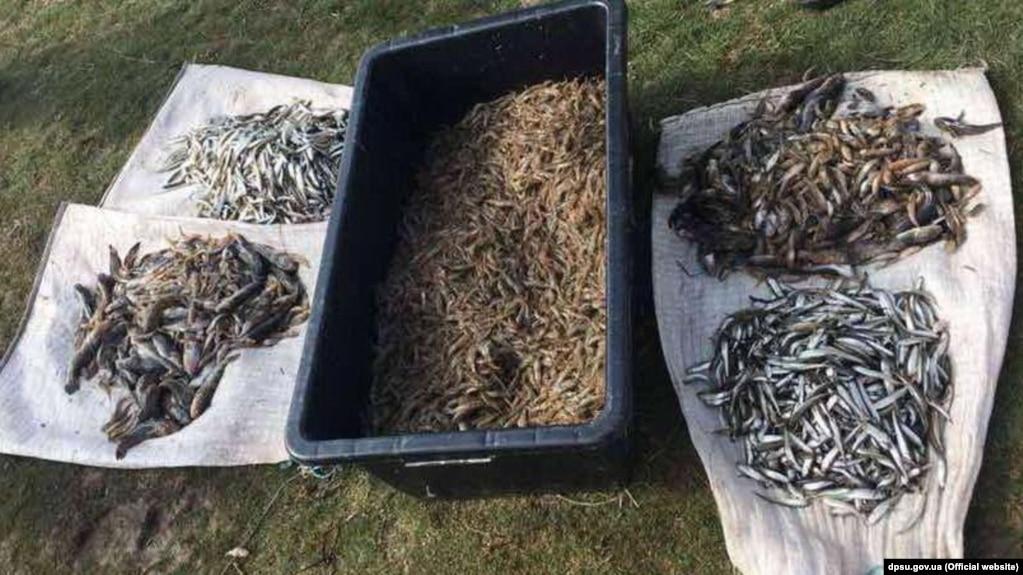 Незаконный вылов рыбы. Иллюстрационное фото