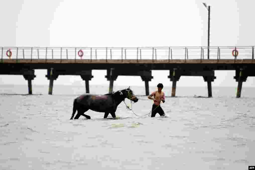 A man leads a horse in the waters of the Caspian Sea off the coast of Baku, Azerbaijan. (AFP/Tofik Babayev)