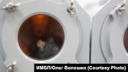 Мышь в боксе Биона