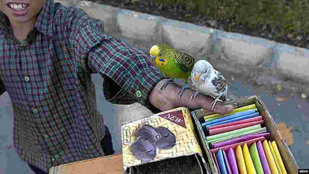 عکس از مجتبی تکین